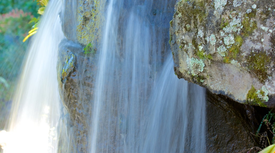 Maleny Botanic Gardens featuring a cascade