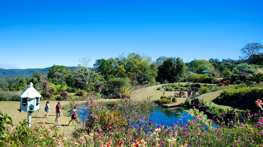 Maleny Botanic Gardens showing landscape views and a garden