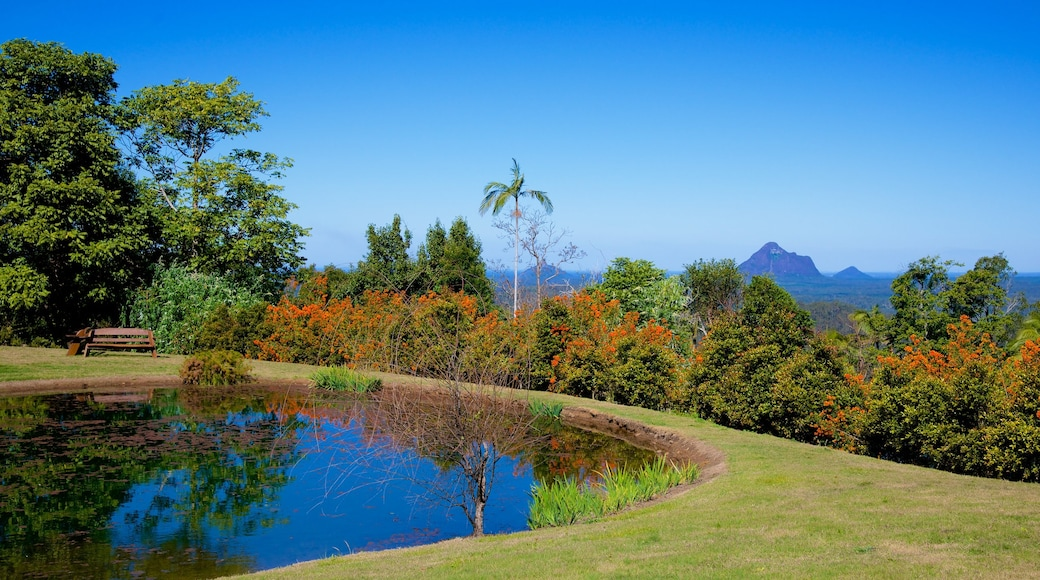 Maleny Botanic Gardens showing a park and a pond