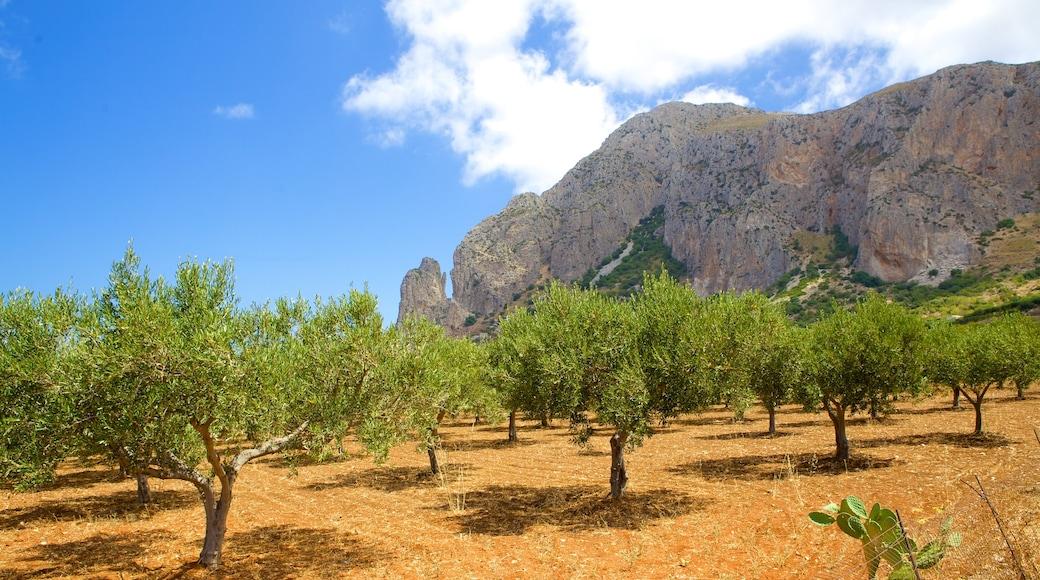Provinz Trapani das einen ruhige Szenerie, Farmland und Berge