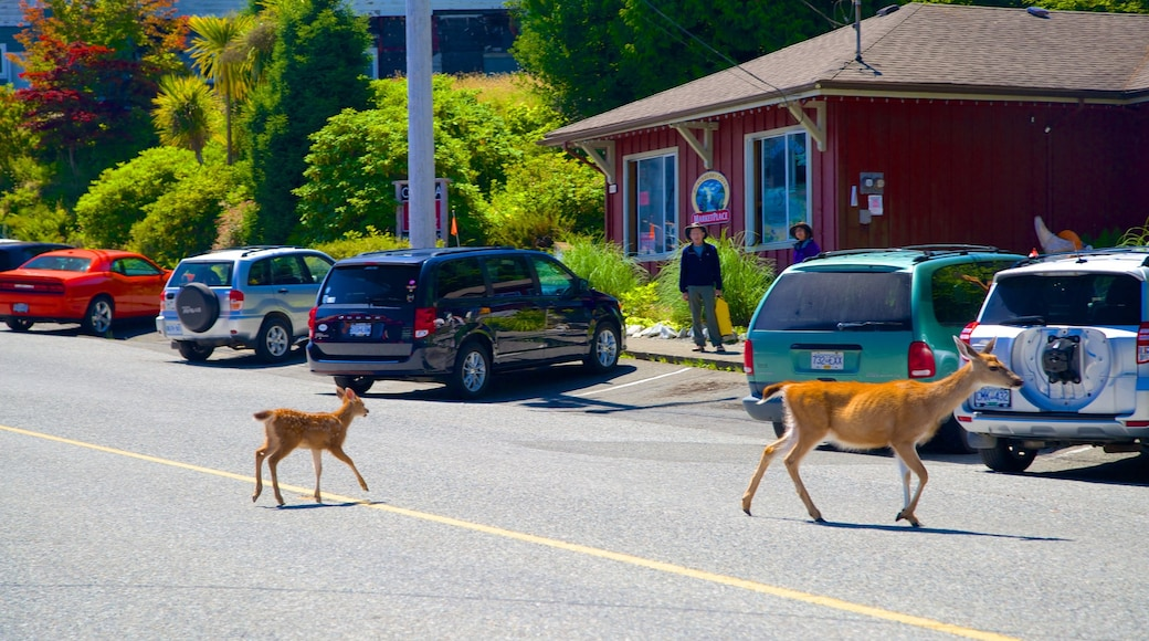 Ucluelet which includes street scenes, land animals and cuddly or friendly animals