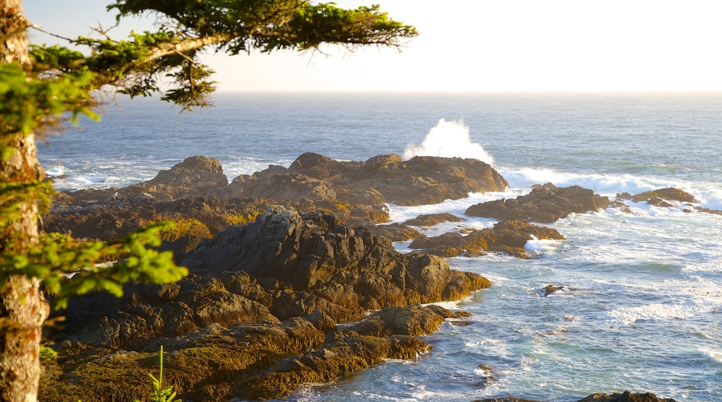 Wild Pacific Trail featuring rugged coastline