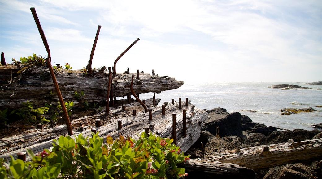 Ucluelet Big Beach showing general coastal views