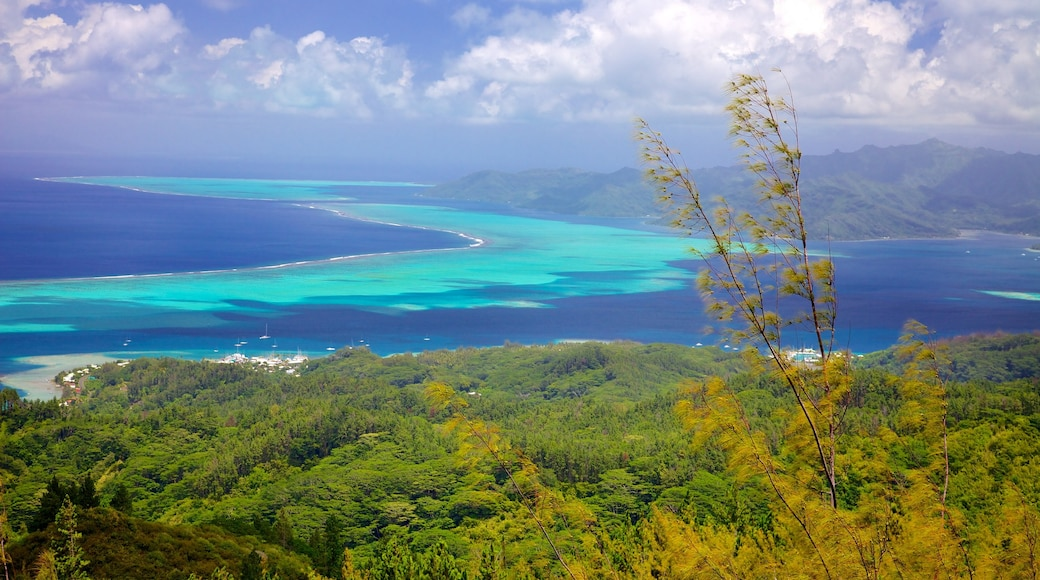 Raiatea mostrando vistas de paisajes y vistas generales de la costa
