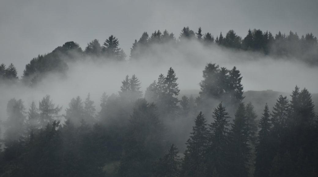 Skigebiet Ciampino-Sella welches beinhaltet Waldmotive und Nebel