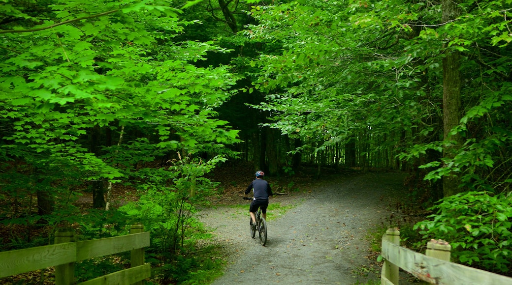 Fredericton showing forests, a garden and mountain biking