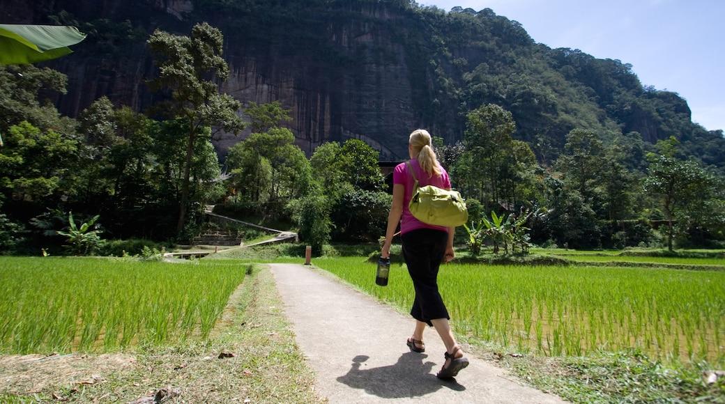 Sumatra showing hiking or walking as well as an individual female