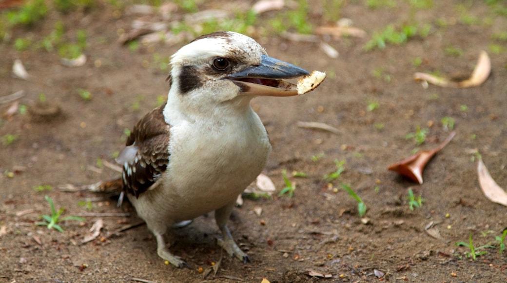 Mount Warning featuring bird life
