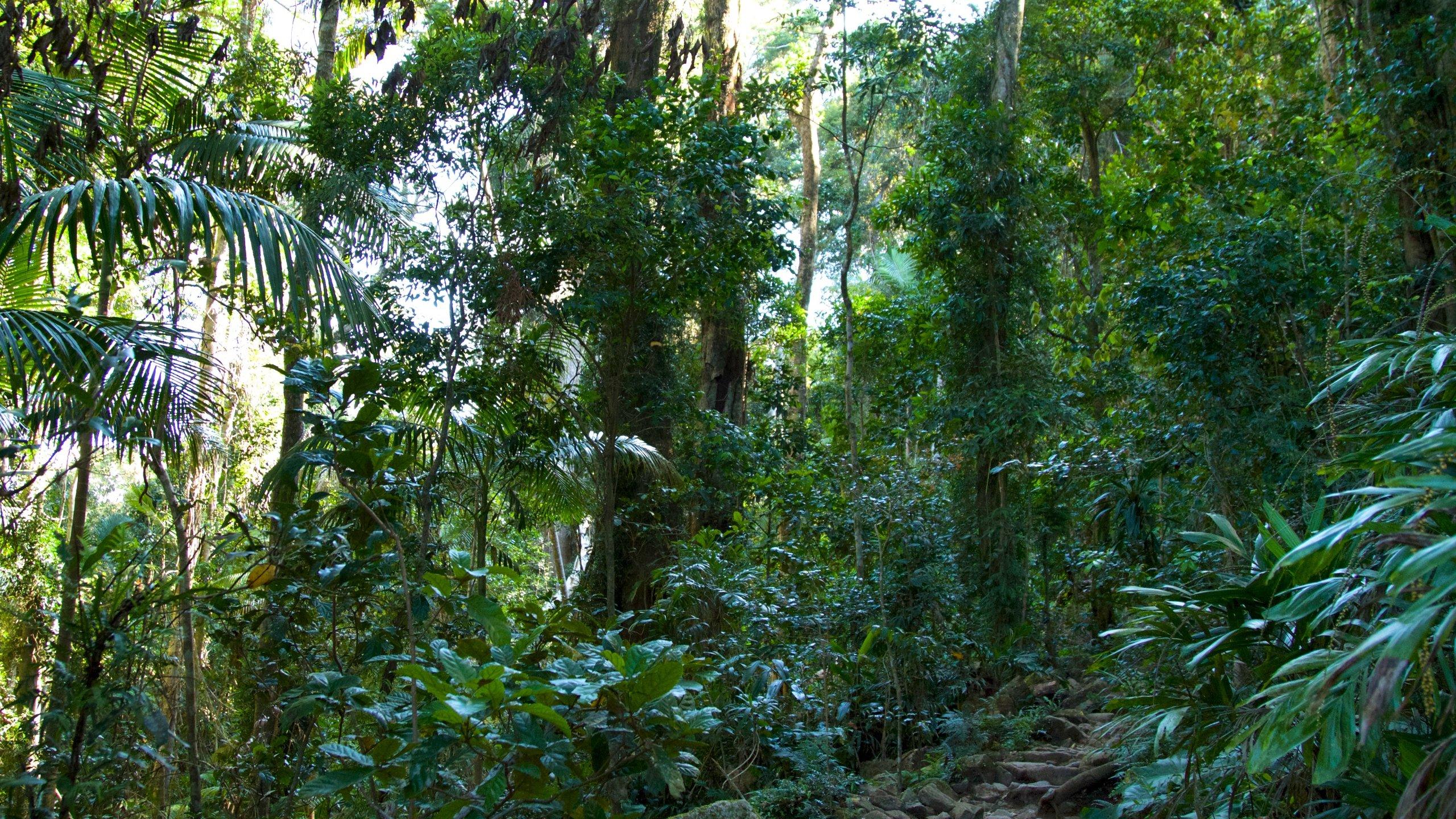 Mount Warning National Park, Mount Warning, New South Wales, Australia
