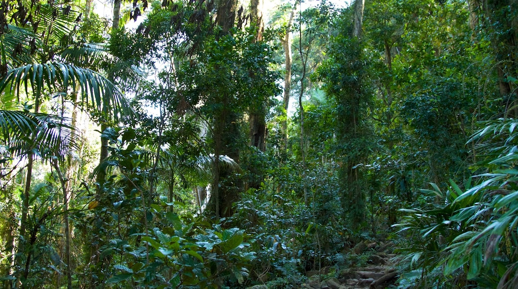 Mount Warning which includes rainforest