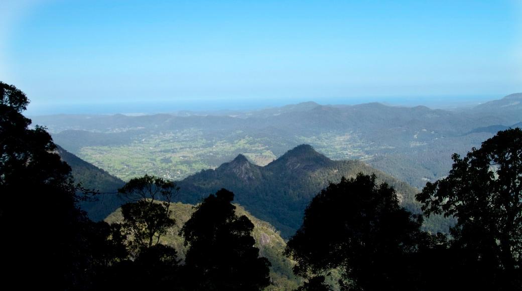 Mount Warning ofreciendo vista panorámica y escenas tranquilas