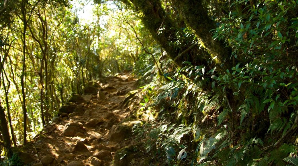 Mount Warning que incluye bosques y selva