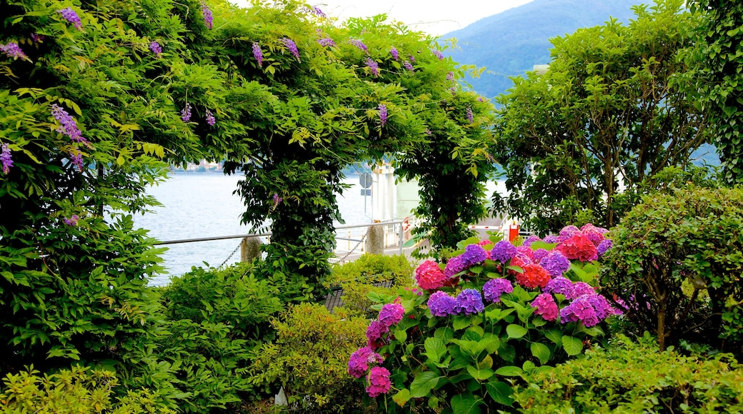 Como showing general coastal views, a park and flowers