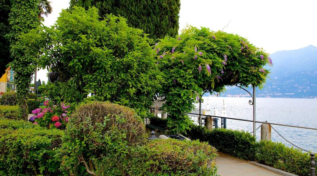 Cadenabbia featuring a garden