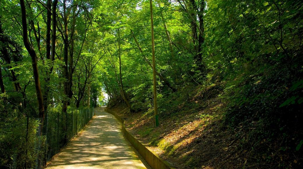 Comer See Region das einen Park und Wälder