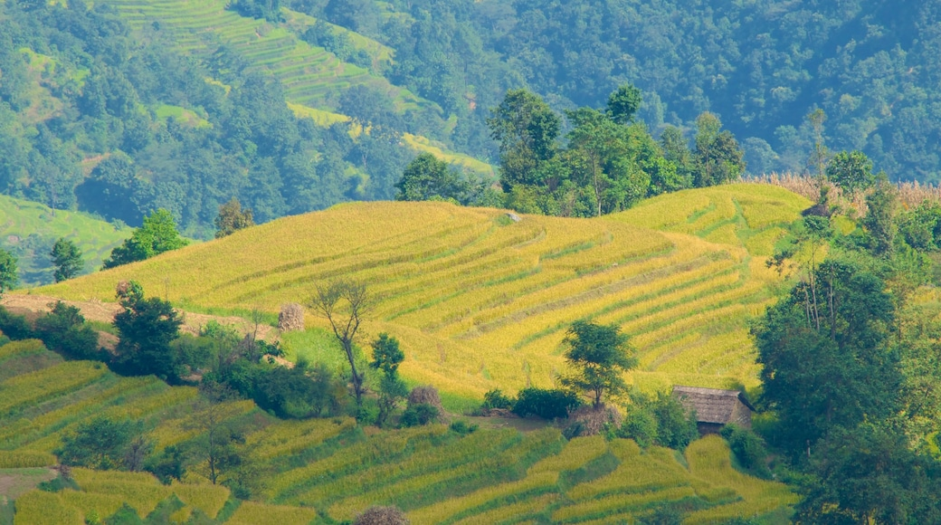 Nagarkot showing farmland and tranquil scenes