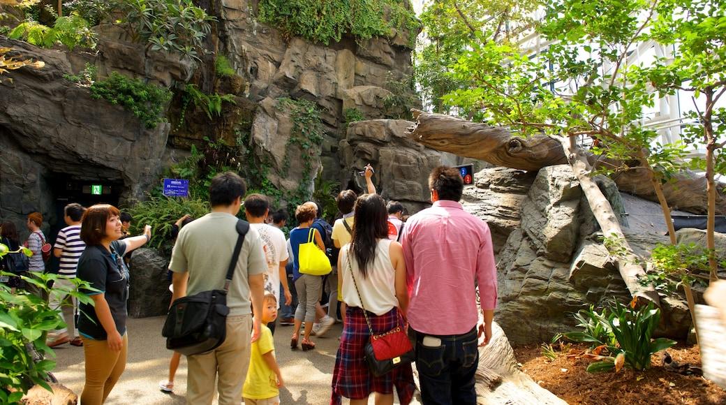 Osaka Aquarium Kaiyukan showing a park as well as a small group of people