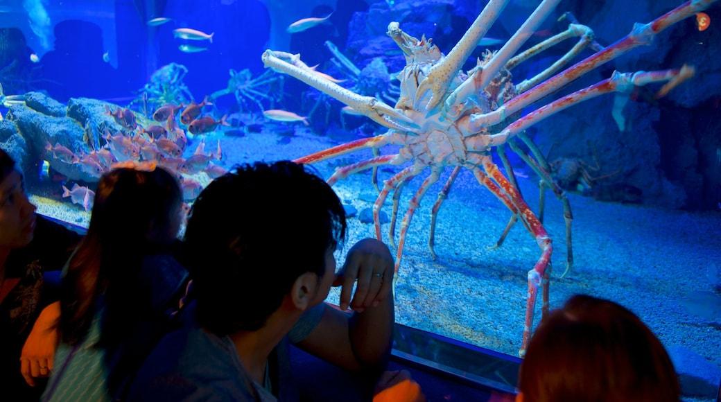 Acquario di Osaka caratteristiche di animali marini cosi come un piccolo gruppo di persone