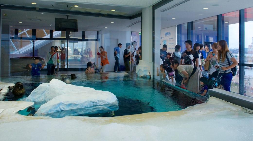 Acquario di Osaka mostrando animali marini e vista interna cosi come un piccolo gruppo di persone