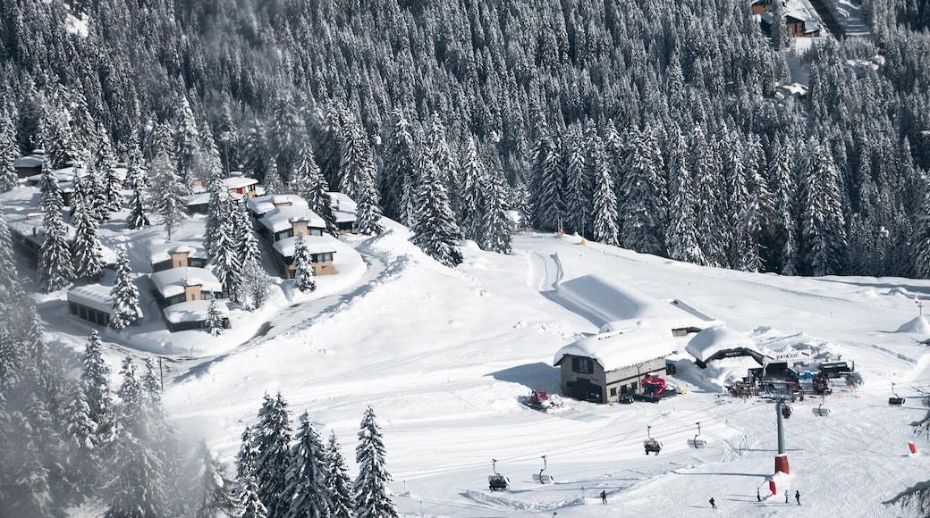 Madonna di Campiglio mostrando neve, paesaggio forestale e piccola città o villaggio