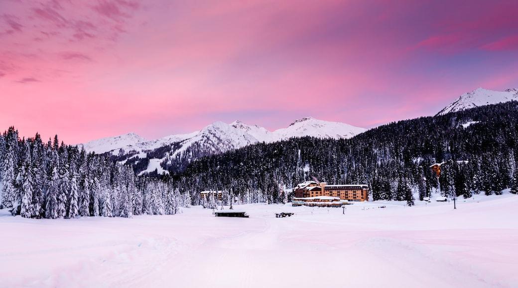 Madonna di Campiglio montrant petite ville ou village, forêts et neige
