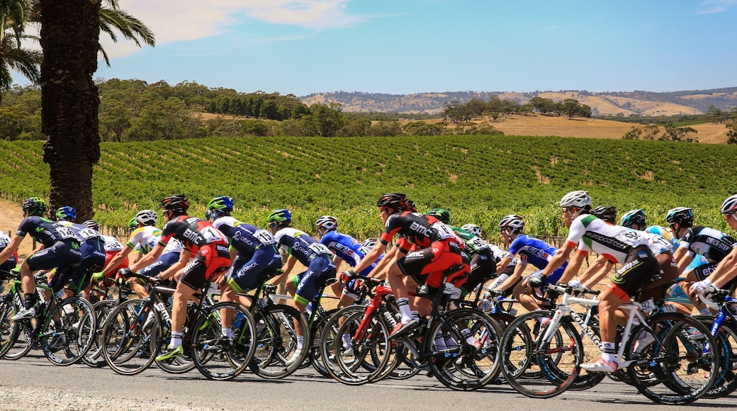 Barossa Valley which includes farmland and road cycling as well as a large group of people