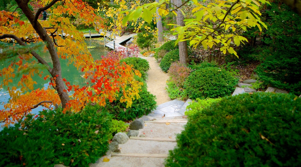 Anderson Japanese Gardens which includes fall colors and a garden