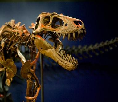 Burpee Museum of Natural History