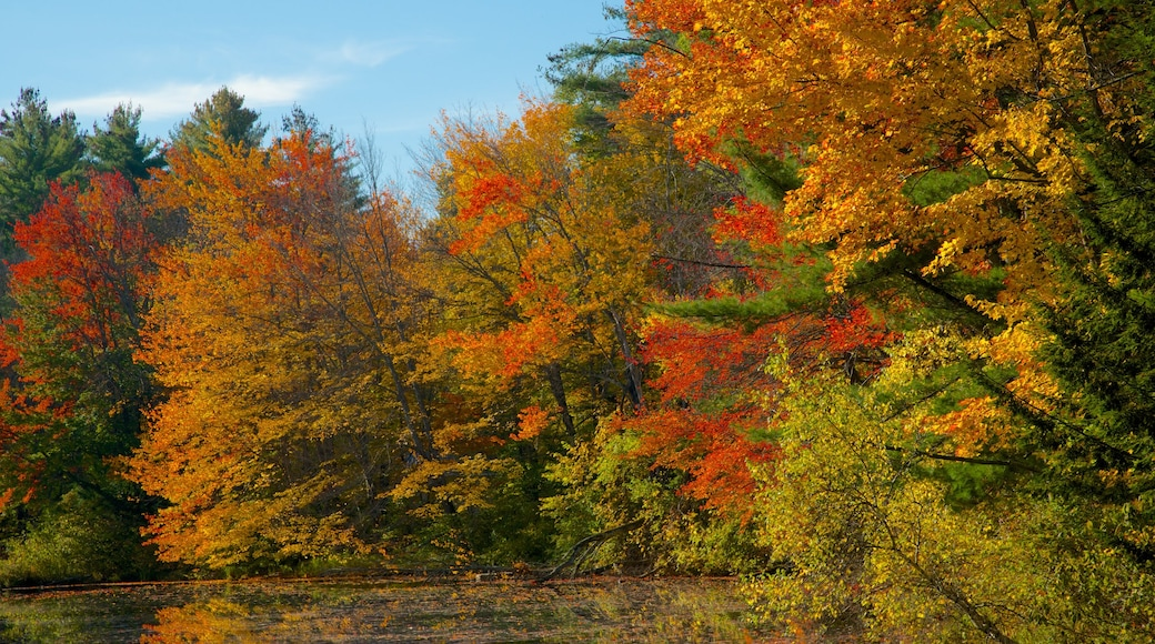 Conway showing a park, autumn leaves and a river or creek