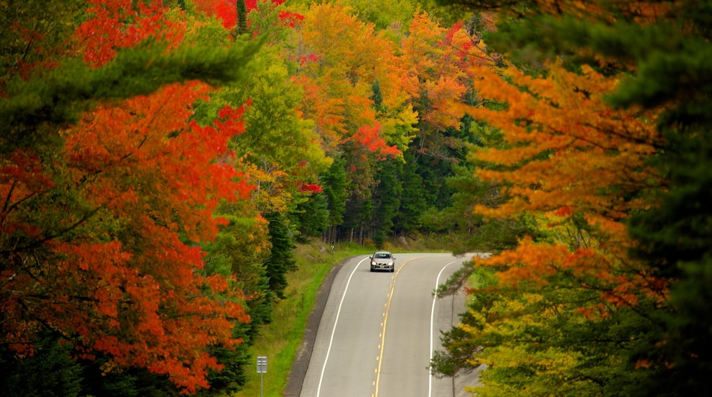 Lake George showing touring, forests and autumn colours
