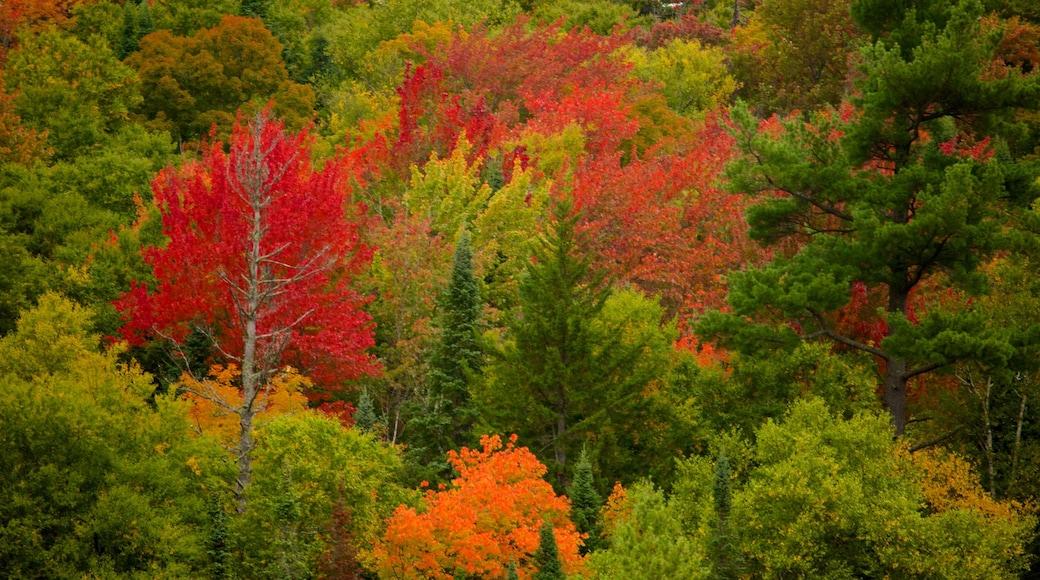 Lake Placid mit einem ruhige Szenerie, Waldmotive und Herbstfarben