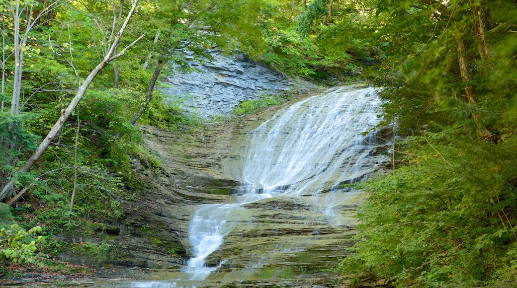 Buttermilk Falls State Park featuring tranquil scenes and a river or creek