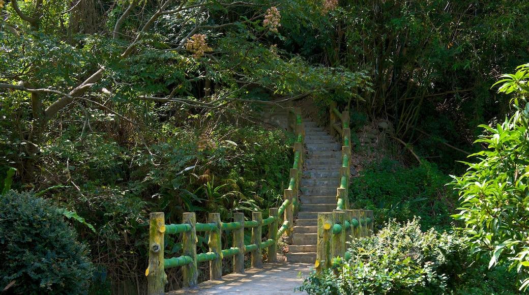 Hsinchu Botanical Garden featuring a garden
