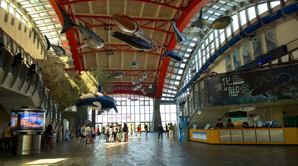 國立海洋生物博物館和水族館 其中包括 內部景觀