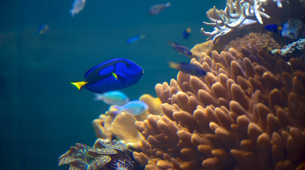 National Museum of Marine Biology and Aquarium featuring marine life