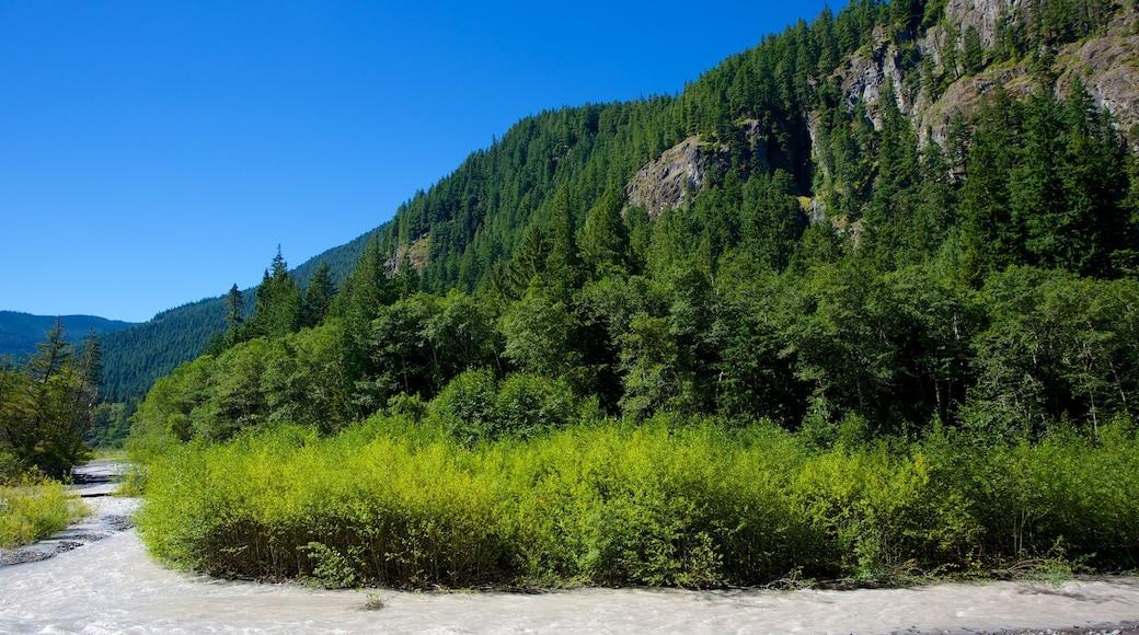 Parque Nacional del Monte Rainier que incluye escenas forestales y escenas tranquilas