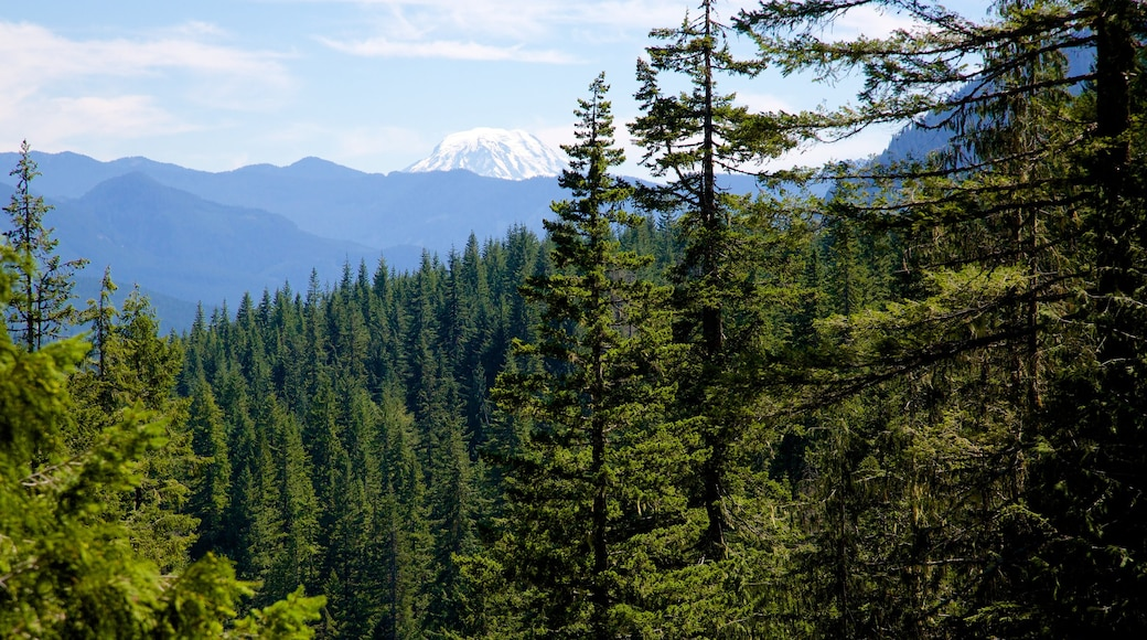 Mount Rainier National Park showing forest scenes and tranquil scenes