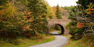 Acadia National Park featuring forests and a bridge