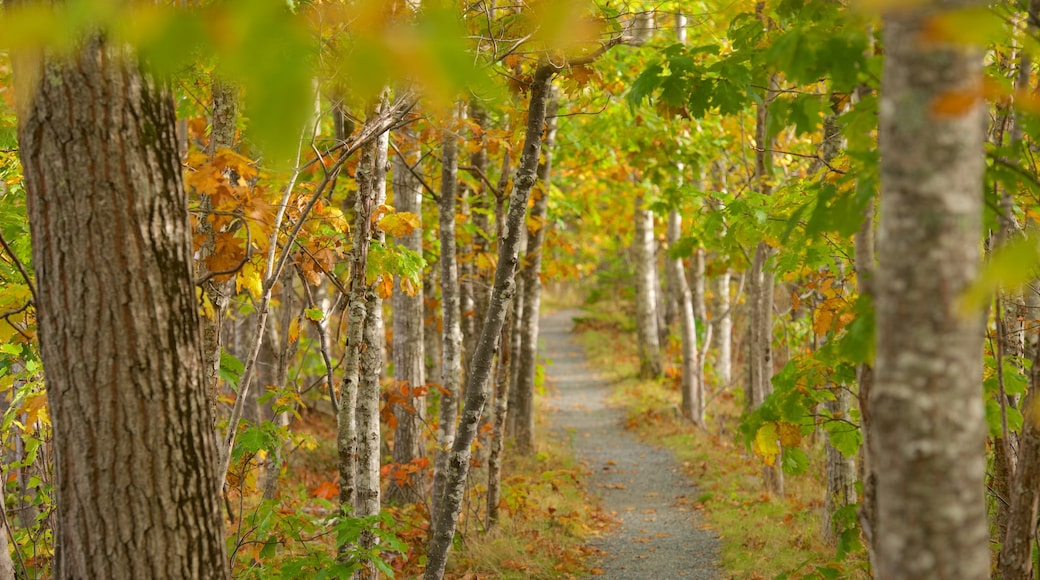 Acadia National Park featuring forest scenes and autumn leaves