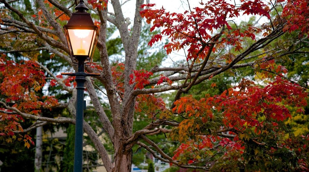 Marblehead featuring autumn leaves