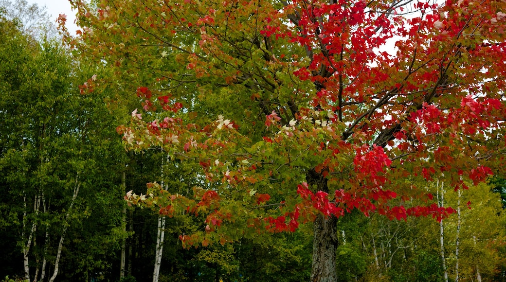 Greenville showing autumn leaves