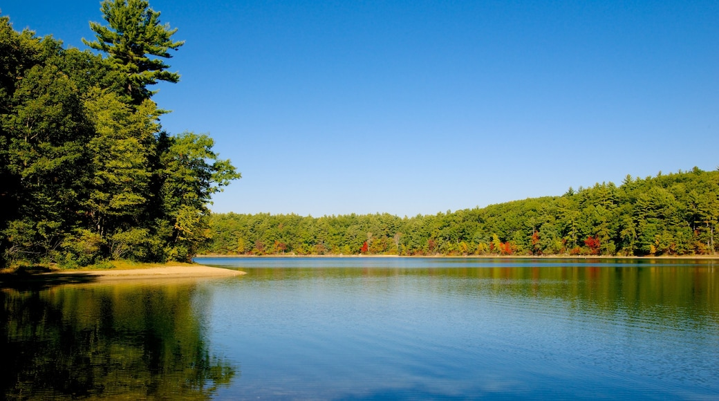 Walden Pond showing landscape views and a lake or waterhole