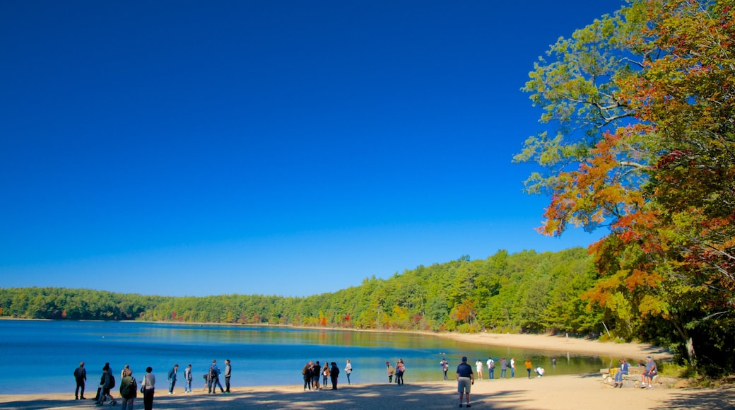 Walden Pond which includes skyline, a lake or waterhole and landscape views