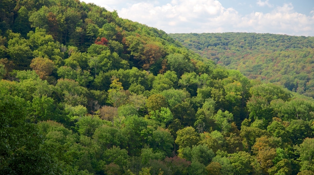 Northwest Pennsylvania showing rainforest and forests