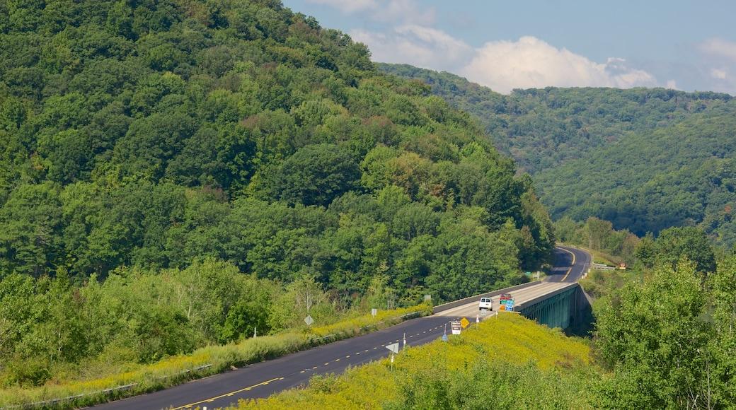 Northwest Pennsylvania showing forest scenes