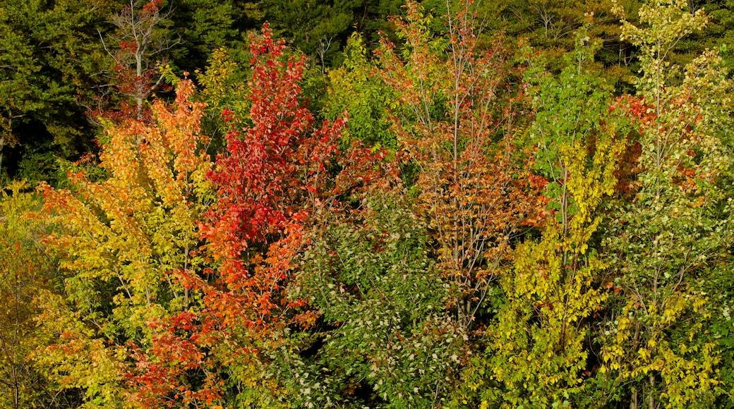 Campo de golf Killington ofreciendo hojas de otoño