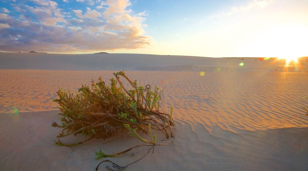 Fuerteventura featuring a sunset and desert views