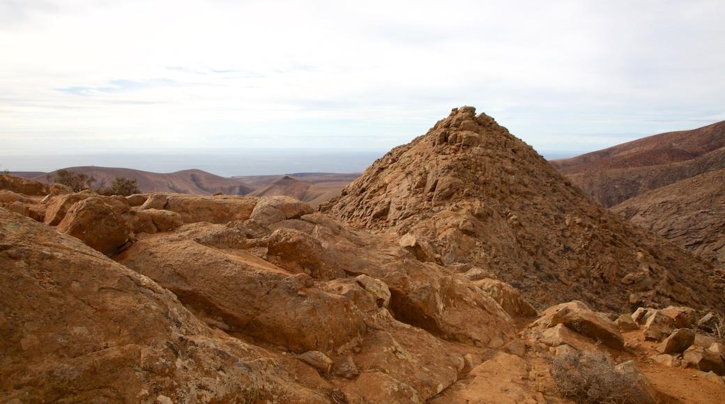 Pajara che include vista del deserto e paesaggi rilassanti