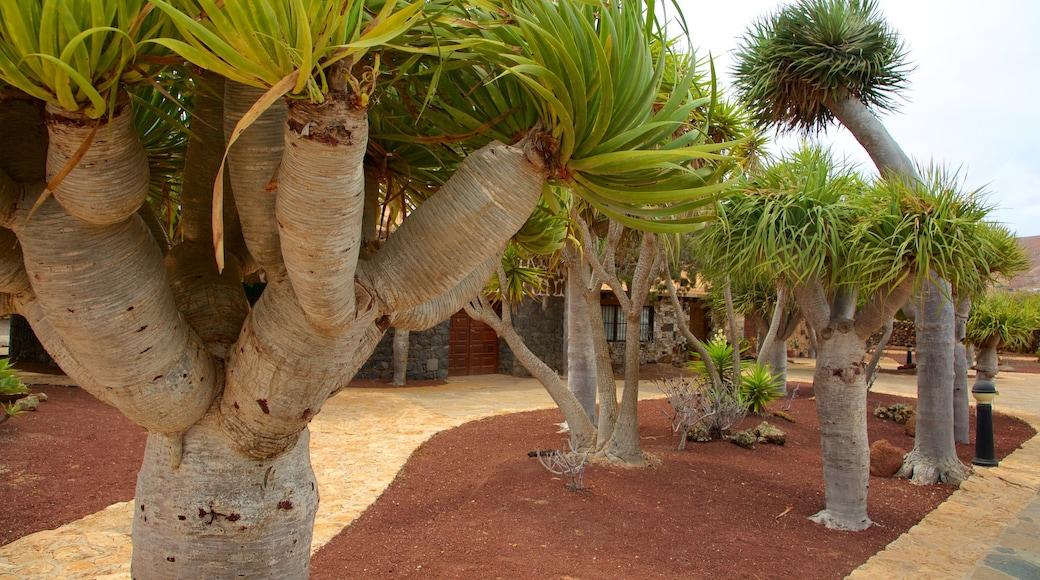 Antigua mit einem Garten