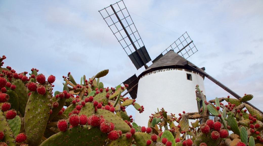 Antigua welches beinhaltet Windmühle und Blumen